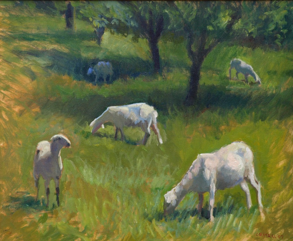 Sheep, Oil on Canvas, 20 x 24 Inches, by Susan Grisell, $650